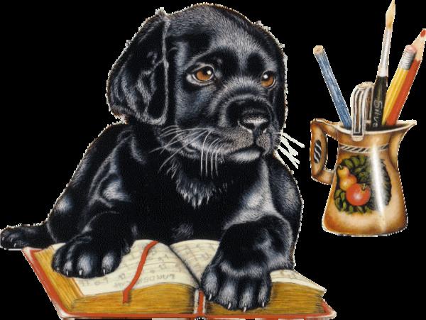 Labrador sur un livre