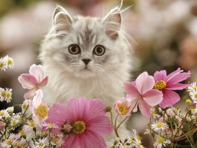 Beaux chats au milieu des fleurs