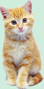 Prenom pour chat blanc