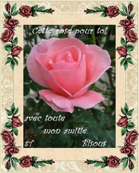 Cette rose pour toi ..
