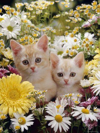 Chats au milieu de fleurs