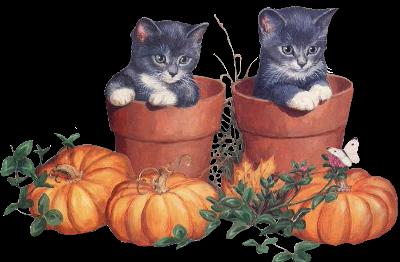 chats citrouille