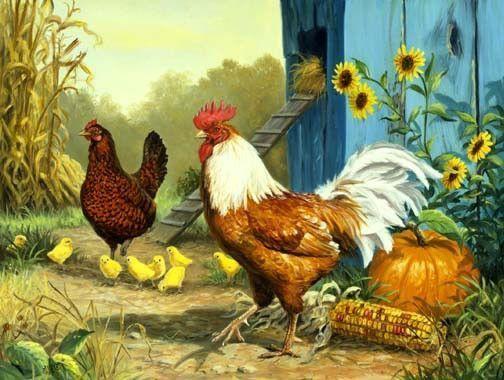Coq avec une poule et ses poussins - Poule et ses poussins ...
