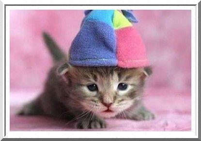 chaton avec un bonnet