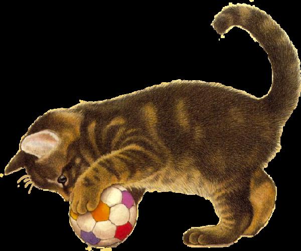 chat qui joue avec un ballon