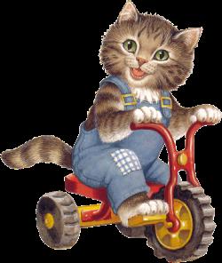 chat sur un vélo