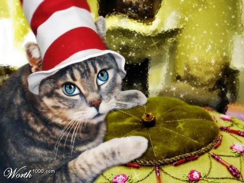 chat avec un chapeau
