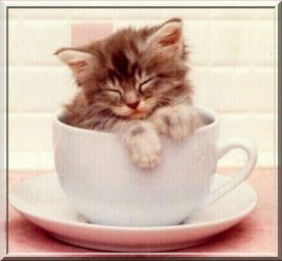 Chat qui dort dans une tasse