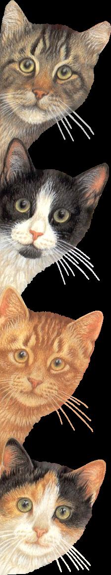 chats qui font coucou