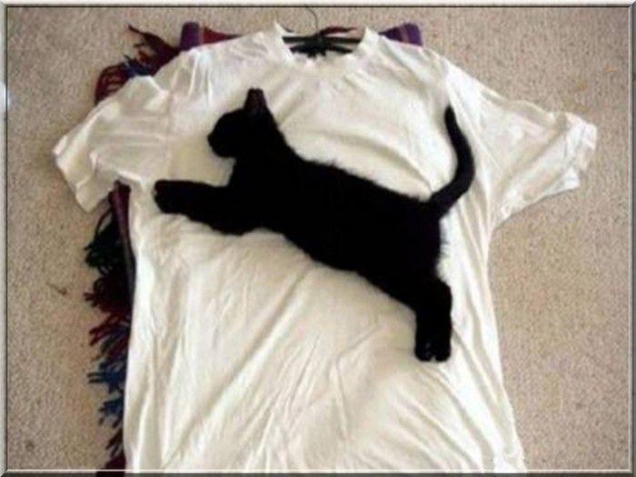 chat qui dort sur un tee-shirt