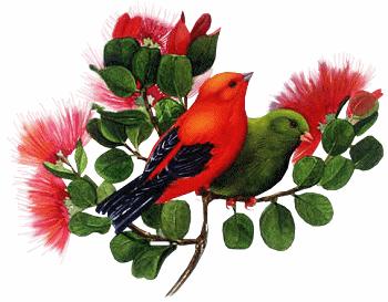 Oiseau rouge et oiseau vert for Oiseau vert et rouge