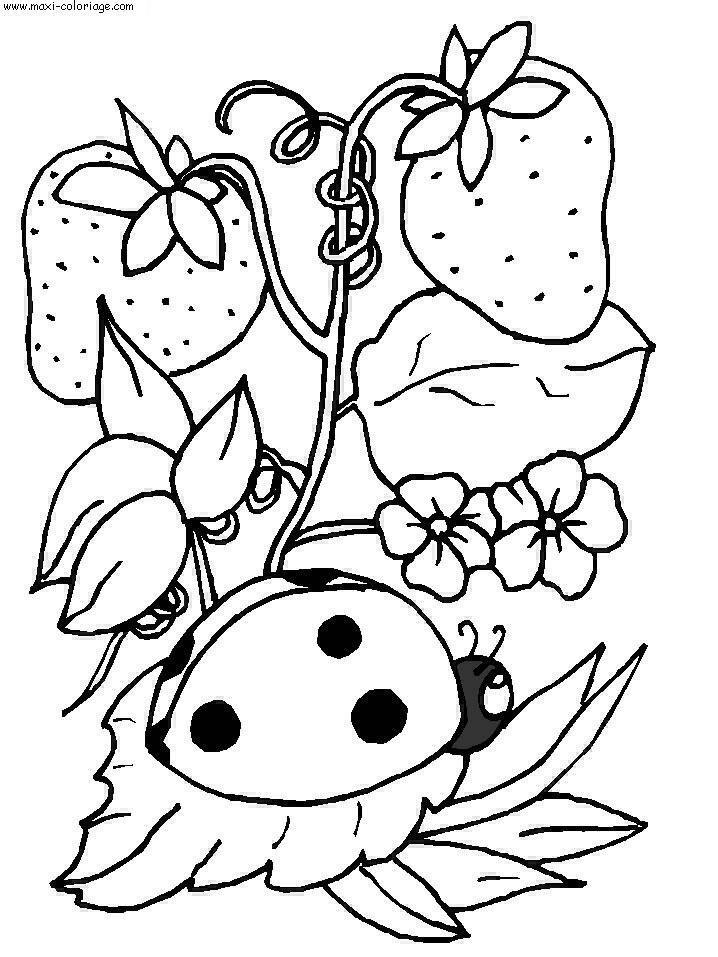 Coloriage d 39 une coccinelle sous des fraises centerblog - Dessin coccinelle ...
