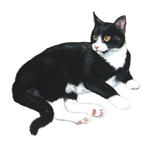 Chats beaux gifs du net page 8 - Chat dessin noir et blanc ...